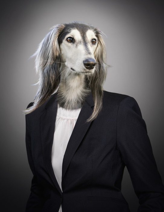 Photo of a humanoid with a dog head wearing a women's suit jacket. Image from Sarah Richter on Pixabay