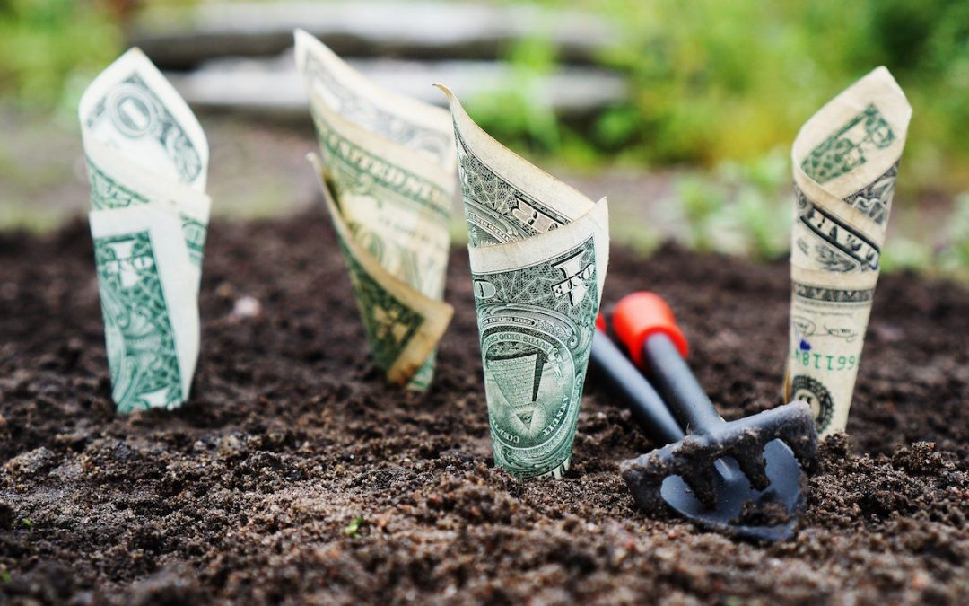 Money grows inexplicably from the ground.